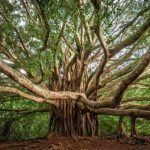 Convocan a Concurso Nacional de Fotografía Forestal