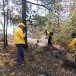 Incendios forestales en 10 municipios del Estado