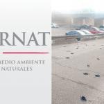 Aún no sabemos si se enviaron a analizar las aves muertas: Semarnat