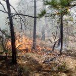 Después de 16 días se logró controlar incendio en Madera; miles hectáreas perdidas
