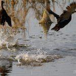 Aves en peligro de extinción, mal uso de suelo en Chih: Monitor Conabio