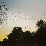 En noviembre se espera migración masiva de aves en Chih