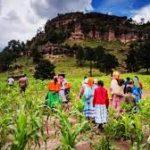Semillas para mejorar la siembra en la Sierra Tarahumara; manual bilingüe para cultivo