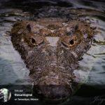 NaturaLista, ¡toma fotos de especies silvestres y ayuda a identificarlas!
