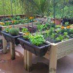 Aprender a cosechar nuestros alimentos nos conecta con la naturaleza: Libélula Verde