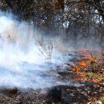 En una semana, incendios afectan 5 mil 156 hectáreas en todo el país; se registran 5 en Chihuahua