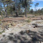 En Chihuahua son asesinados 2 defensores del bosque anualmente. Esta vez las víctimas fueron madre e hijo