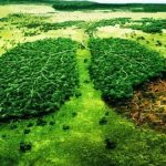 Forestación, acción central latinoamericana para mitigar el cambio climático